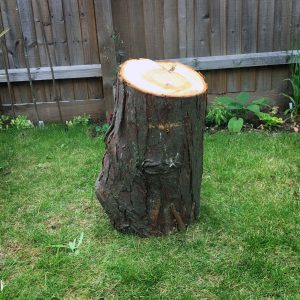 Large Standing Logs £5 each